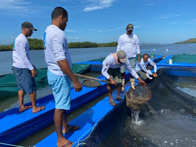Pescadores del golfo de Nicoya empiezan  a ver la cosecha de la maricultura