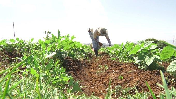 Por una agricultura que garantice la soberanía alimentaria y la salud ecosistémica
