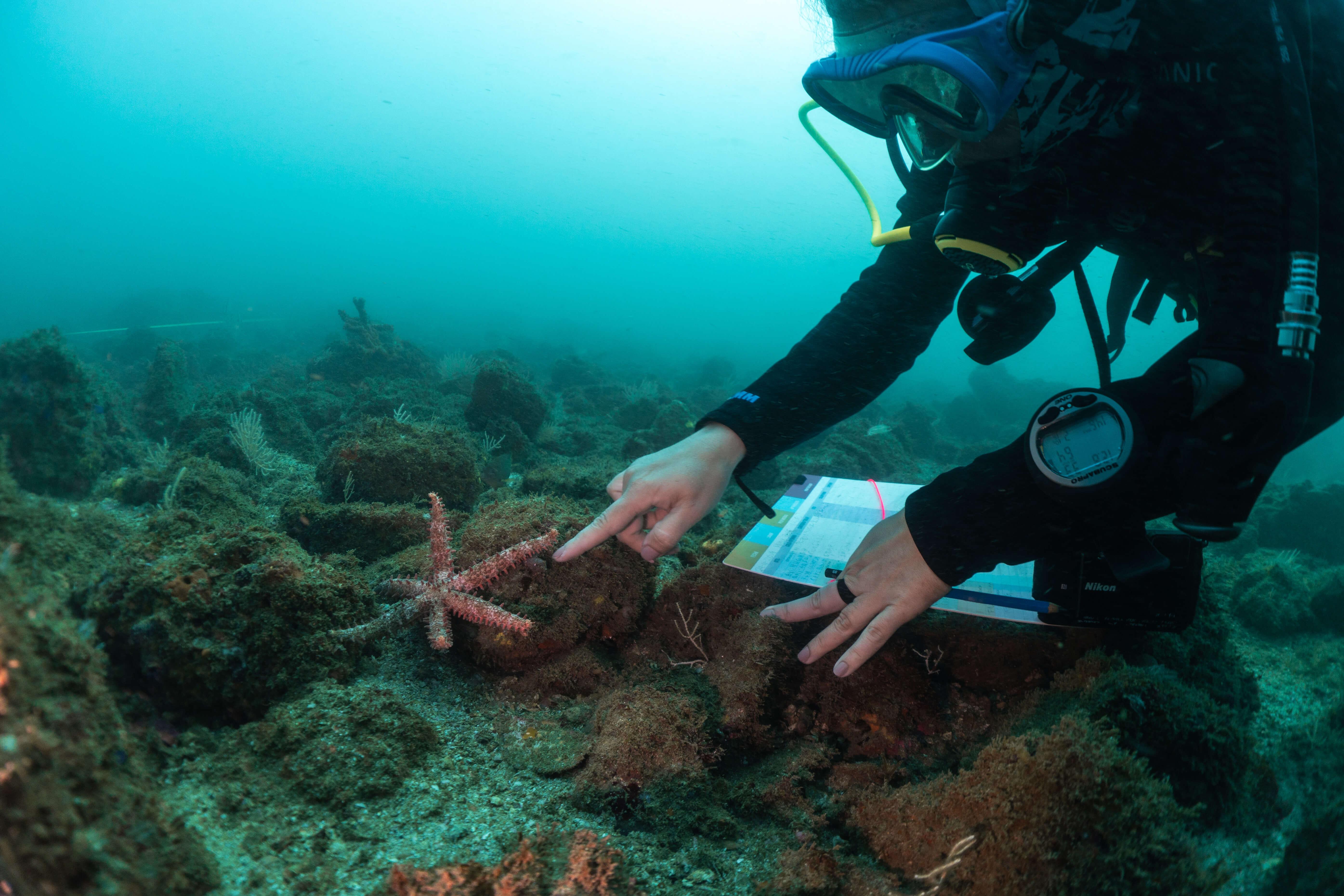Crean protocolo nacional para monitoreo de arrecifes rocosos