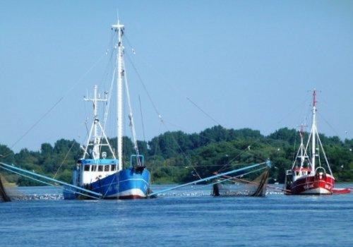 UNA pide veto a Ley de Pesca de arrastre