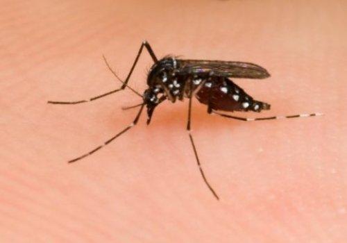 #Quédate en casa y prevén el dengue