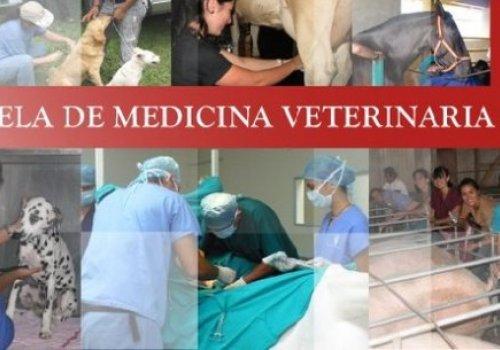 Reconocen trayectoria y aportes científicos de veterinarios