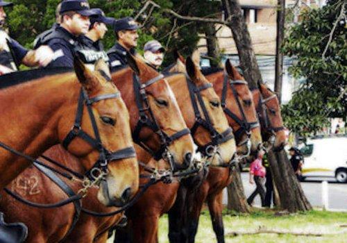 Hallan nuevas bacterias en caballos de la Policía Montada
