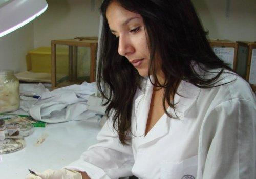 UNA abre inscripción a maestría en enfermedades tropicales