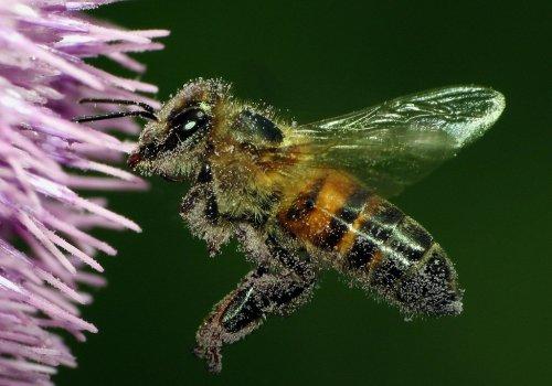 Iret y Cinat de la UNA hacen llamado vehemente a la protección de las abejas