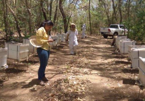En el Pacífico Central: traslape de apiarios podría disminuir producción de miel