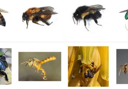 Resultados del I conteo nacional de abejas