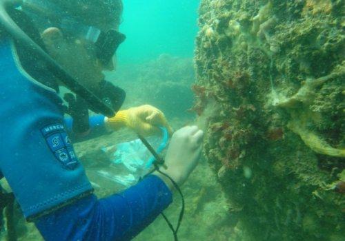Contaminación por metales es un  riesgo latente para corales del Caribe