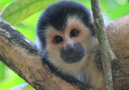 Primates y su conservación
