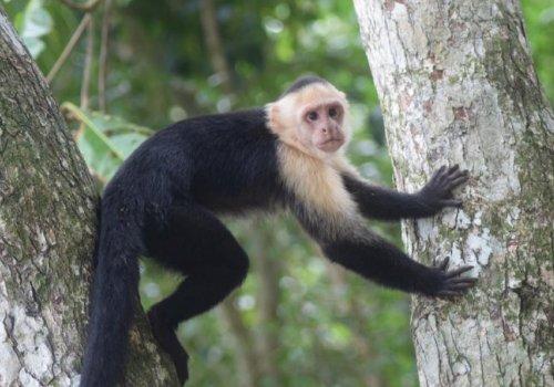 Evitar interacción con vida silvestre prevendría una nueva pandemia