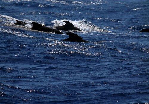 Conmemoración Día de los Océanos