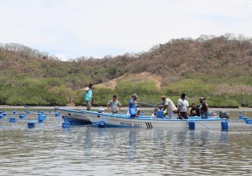 Con ostras inicia siembra de esperanza en Nicoya