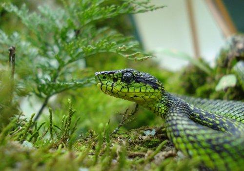 Aprenda sobre serpientes y sea un aliado en su conservación