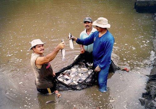 UNA Mirada: Acuicultura en Costa Rica