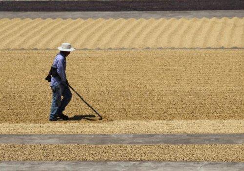 Sector Agroexportador será el más golpeado por limitación de ingreso de migrantes