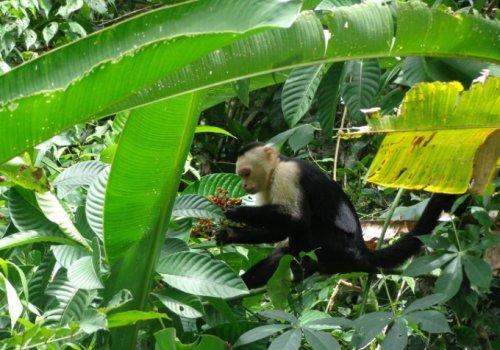 Diagnostican dengue y fiebre del Nilo en monos de vida libre