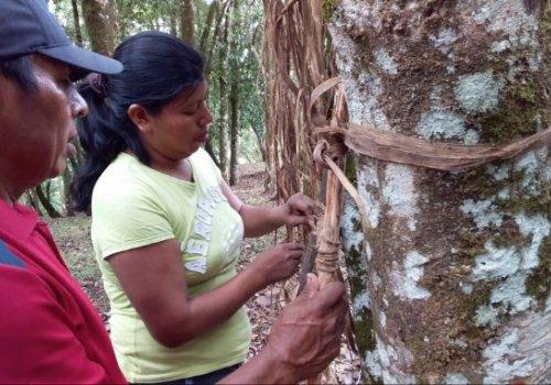Capital social impacta zonas indígenas del Sur