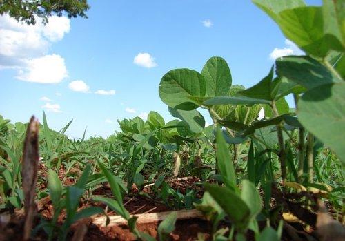 Modelo agrícola tradicional retoma vigencia ante pandemia