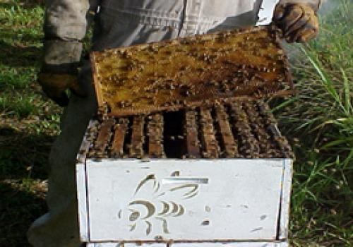 Manejo y control de enfermedades en abejas