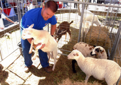 Buscan incentivar producción ovino-caprina