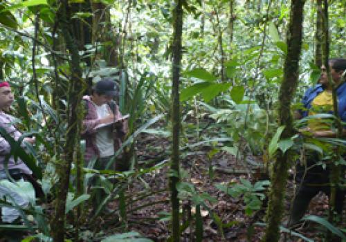 Bosques: testigos silenciosos del cambio global